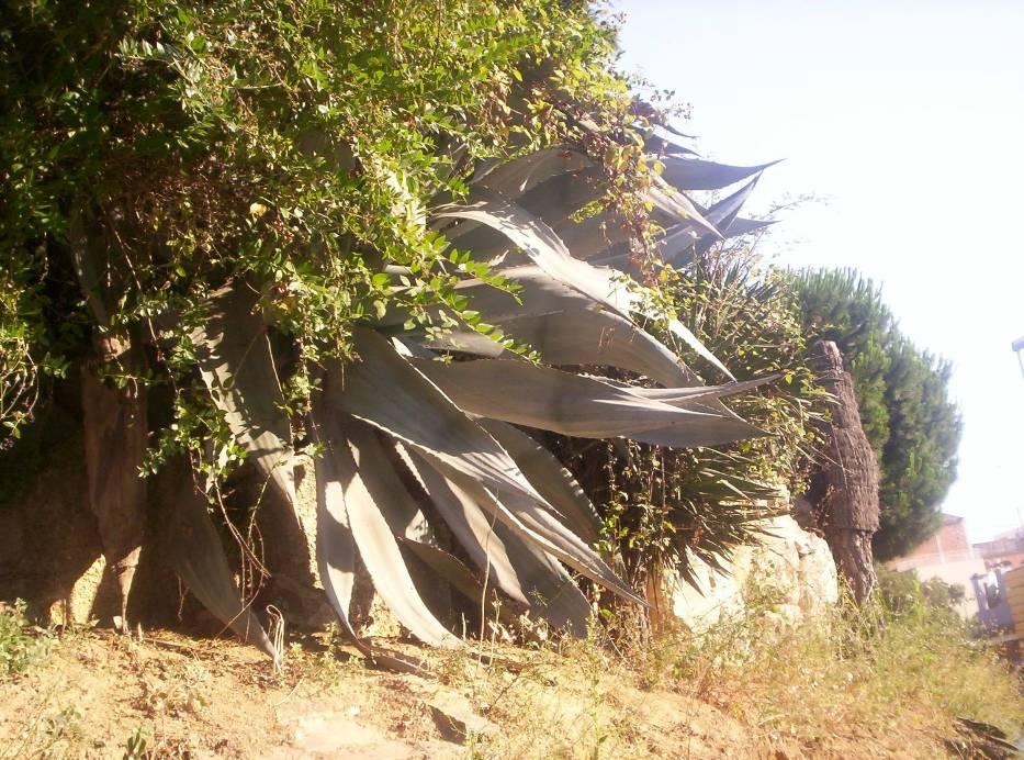 wystawa_kaktusow_botanik