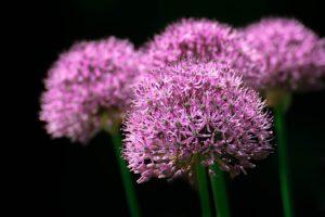 garden-670860_960_720