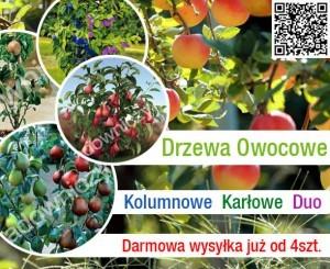 duo drzewka promotional