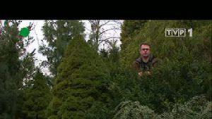 Rok w ogrodzie - Bukszpan