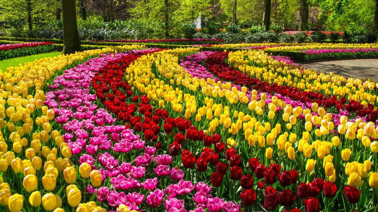 Rok w ogrodzie - 29.04.2017