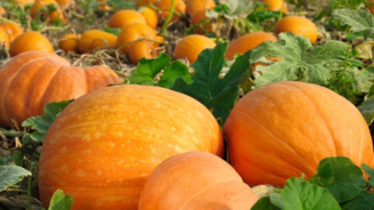 Rok w ogrodzie - 29.10.2011