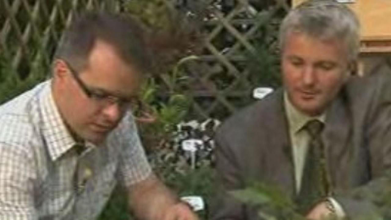 Rok w ogrodzie - 03.09.2011