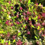 Rok w ogrodzie - 04.11.2017