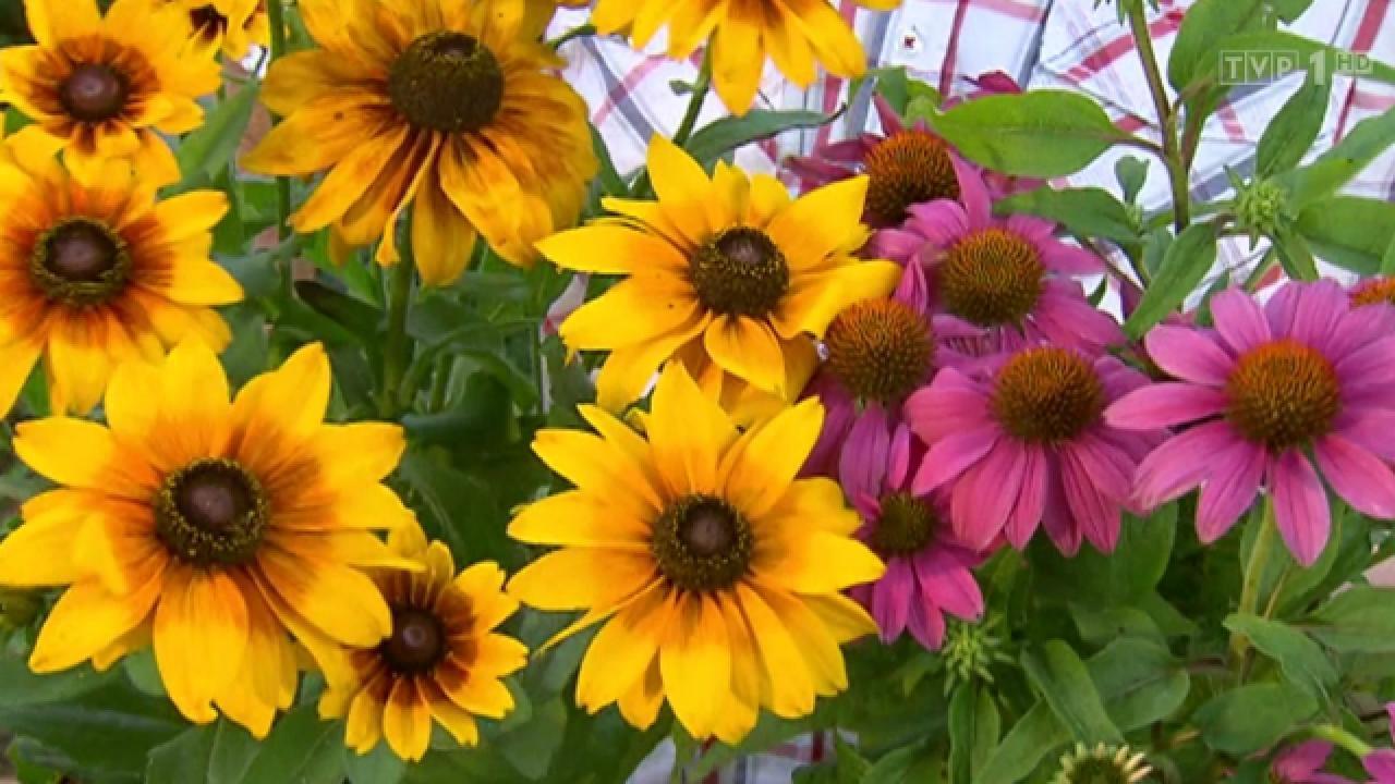 Rok w ogrodzie - 22.08.2015