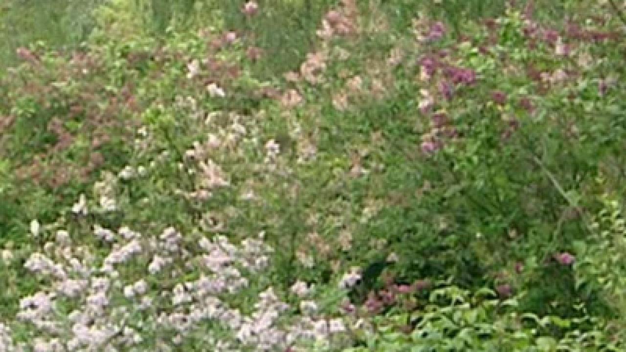 Rok w ogrodzie - 09.06.2012