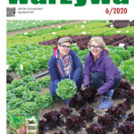 Warzywa 6/2020