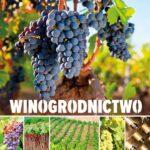 Winogrodnictwo